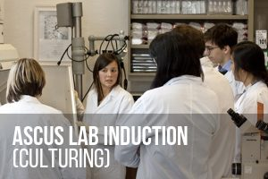 Culturing Induction for beginners @ ASCUS Lab | Scotland | United Kingdom