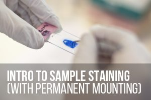 Intro to Sample Staining (With Permanent Mounting) @ ASCUS Lab | Scotland | United Kingdom